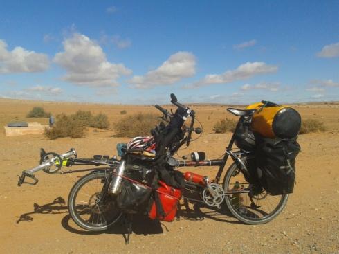 Pino desert